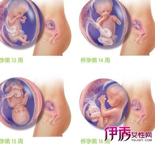 孕妇四个月胎儿图 4个月的生理状况告诉你